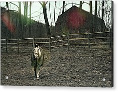 Pasture Pony Acrylic Print by JAMART Photography