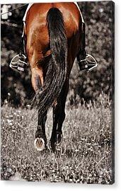 Pasture Practice Acrylic Print by JAMART Photography