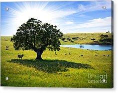 Pasturing Cows Acrylic Print by Carlos Caetano
