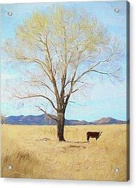 Patagonia Pasture 2 Acrylic Print