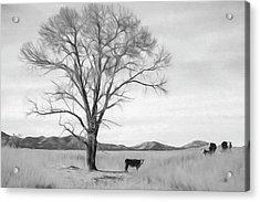 Patagonia Pasture Bw Acrylic Print
