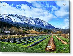 Landscape With Mountains And Farmlands In The Argentine Patagonia Acrylic Print