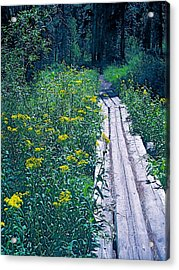 Path 4 Acrylic Print by Pamela Cooper
