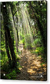 Path In Sunlit Forest Acrylic Print by Elena Elisseeva