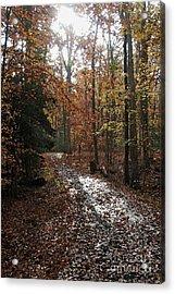Path In The Autumn Color Acrylic Print by Hideaki Sakurai