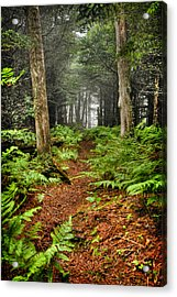 Path In The Ferns Acrylic Print