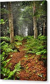 Path In The Ferns Acrylic Print