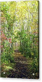 Path In The Woods 3 Acrylic Print