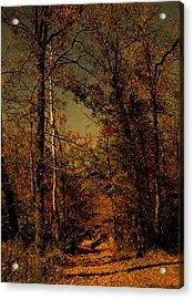 Path Into The Woods Acrylic Print by Nina Fosdick