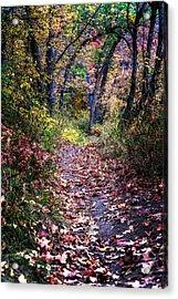 Path Of Leaves Acrylic Print