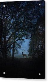 Path Of Shadows Acrylic Print