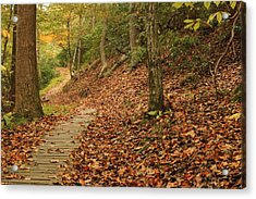 Path To Autumn Acrylic Print