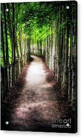 Path To My Destination Acrylic Print by George Oze