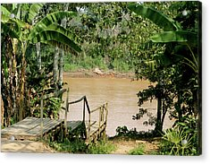 Path To The Amazon River Acrylic Print
