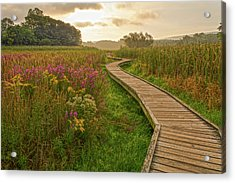 Path To The Light Acrylic Print by Angelo Marcialis