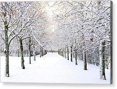 Pathway In Snow Acrylic Print