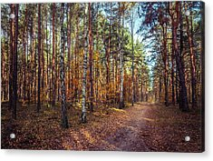 Pathway In The Autumn Forest Acrylic Print