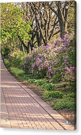 Pathway To Beauty In Lombard Acrylic Print