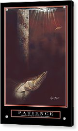 Patience Acrylic Print by Kevin Brant