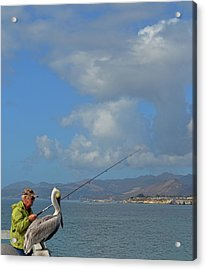 Patient Pelican Acrylic Print by JAMART Photography