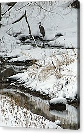 Patiently Waiting 1 Acrylic Print by Paula Guttilla