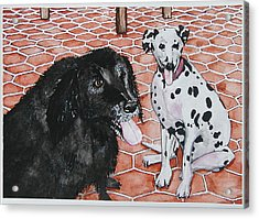 Patio Dogs Acrylic Print by Laura Brightwood