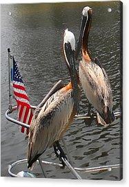 Patriotic Pelicans II Acrylic Print