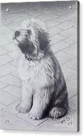 Patsy's Puppy Acrylic Print