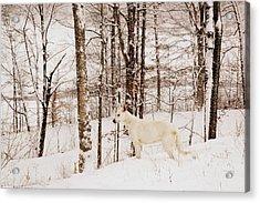 Pausing Acrylic Print by Cheryl Helms