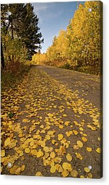 Acrylic Print featuring the photograph Paved In Gold by Steve Stuller