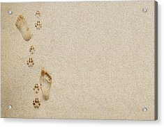 Paw And Footprint 1 Acrylic Print by Brandon Tabiolo - Printscapes