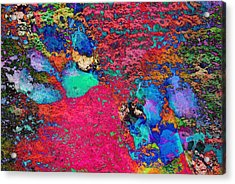 Paw Prints Colour Explosion Acrylic Print by Dorothy Berry-Lound