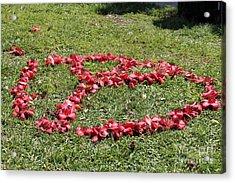 Peace Among The Kapok Flowers Acrylic Print