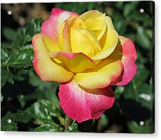 Peace And Love Rose Acrylic Print