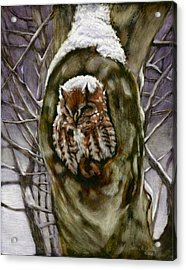 Peace In The Storm - Eastern Screech Owl Acrylic Print