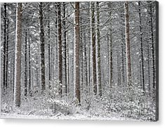 Peace In The Woods Acrylic Print by Catherine Reusch Daley