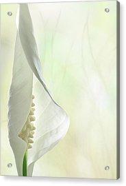 Peace Acrylic Print by John Poon