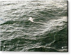 Acrylic Print featuring the photograph Peaceful Gliding At Sea by Piety Dsilva
