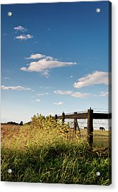 Peaceful Grazing Acrylic Print