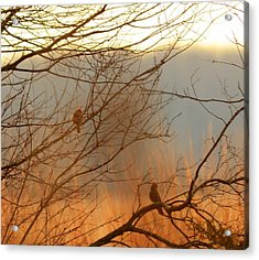 Peaceful Look Acrylic Print by Maria Suhr