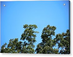 Acrylic Print featuring the photograph Peaceful Moment by Ray Shrewsberry