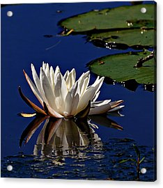 Peaceful Morning #2 Acrylic Print