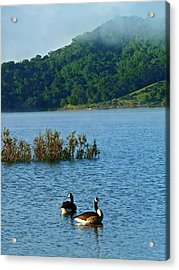 Peaceful Morning Acrylic Print