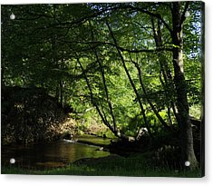 Acrylic Print featuring the photograph Peaceful Mountain Stream by Diannah Lynch