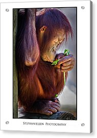 Peaceful Orangutan Acrylic Print