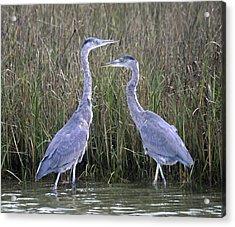 Peaceful Pair Acrylic Print by Betsy Knapp