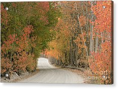 Acrylic Print featuring the photograph Peaceful Sierra Morning by Sandra Bronstein