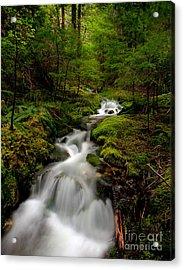 Peaceful Stream Acrylic Print by Mike Reid