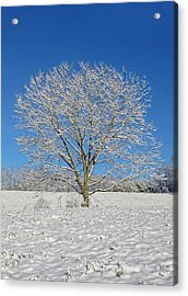 Peaceful Winter Acrylic Print by Susan Leggett
