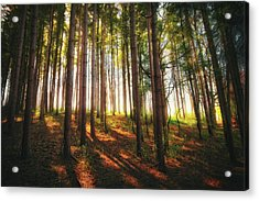 Peaceful Wisconsin Forest 2 - Spring At Retzer Nature Center Acrylic Print by Jennifer Rondinelli Reilly - Fine Art Photography